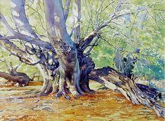 Beech Tree in Summer (Brian Robinson Watercolor)