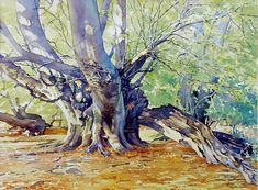 Beech Tree in Summer (Brian Robinson Watercolor)                                                                                                                                                      More