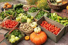 Renee's Garden Harvest 2