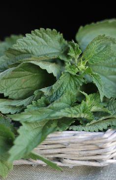 """""""Dessa forma as plantas são intermediárias no processo de absorção desta energia.  Os vegetais atuam como ponte para que possamos aumentar nosso nível de absorção e por isso podem ser tão bem empregadas em diversos usos, como os citados acima."""""""