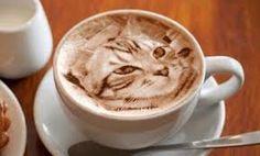 Resultado de imagen para día internacional del café gatos