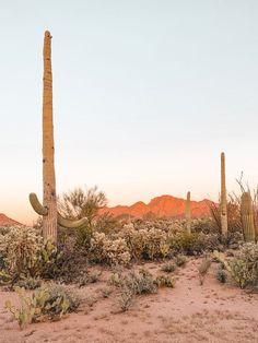 Before Photos: Saguaro Inn – The Joshua Tree House Desert Dream, Desert Life, Wallpaper Praia, Beautiful World, Beautiful Places, Desert Aesthetic, House In Nature, Adventure Is Out There, Plein Air