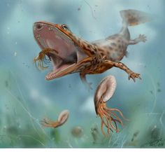 Mahavisaurus dentatus  ... Temnospondyl  //Rhytidosteidae http://davidebonadonna.it/?p=210