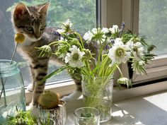 use the rule of three — center bouquets around the same color palette with each flower carrying a distinctly different shape — to create an arrangement that's subtly striking, a la found art. kitties are an added bonus.