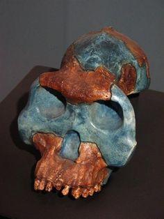 Australopithecus garhi (BOU-VP 12-130)