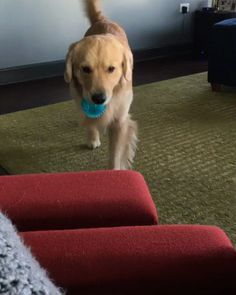 He Just Wants Someone To Play With http://ift.tt/2gea60P