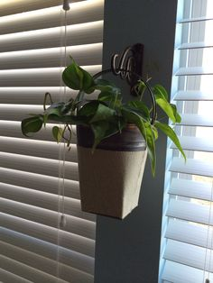 Indoor Wall plant! - Garden wall hook from Lowes and a rustic bucket from the local craft store. Screw up the hook and place your bucket with an indoor plant of your choice. Enjoy!