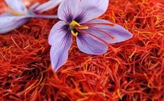 Saffron Spice for The Treatment of Depression