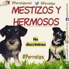 Sin razas no habría mestizos.  No discriminemos a ninguno #perrotips