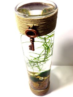 Marimo Steampunk Hemp Terrarium with Java Moss Buddy / Home Decor / Office Decor / Home and Garden on Etsy, $24.99