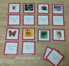 Phonemic Awareness: Rhyming Riddles (Bug theme) at Trillium Montessori