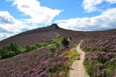 Path through the heather - Scotland.