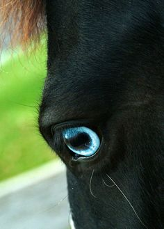 Blue eye on a black horse