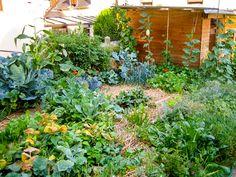 Le florissant jardin de Joseph Chauffrey est situé en pleine ville, à Sotteville-lès-Rouen (Seine-Maritime). Sur le terrain de 150 m², on trouve un potager de 25 m², un verger et une serre, dans lesquels Joseph fait pousser près de 300 kilos de fruits et de légumes par an, selon les principes de la permaculture. La vidéo ci-dessous (de 15 minutes) présente avec clarté de nombreux principes (multiplier les interations entre les éléments de l'écosystème, s'appuyer sur la nature) et techniques…