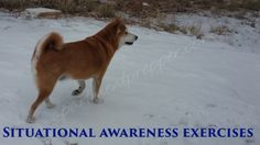Situational Awareness Exercises