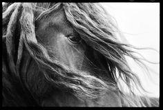 Do fotógrafo Roberto Dutesco, o livro The Wild Horses of Sable Island.  Livro registra curiosa relação entre ilha canadense e cavalos selvagens.  Fonte: Revista GQ