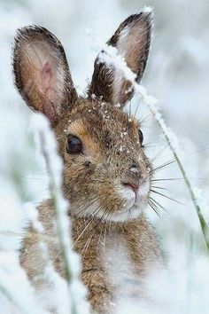 hare i sne, vinter, bunny rabbit snow winter animals photos Nature Animals, Animals And Pets, Baby Animals, Cute Animals, Animals In Winter, Animals In Snow, Beautiful Creatures, Animals Beautiful, Animals Amazing