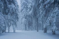 tulipnight:   Foggy Winter bySteffen Egly - ✿Spirit Of The Forest