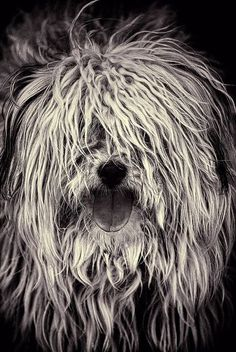 The Shaggy Dog... Memories while listening to that evocative piece from Watership Down!