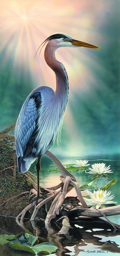 38 Trendy Ideas For Bird Pictures Art Blue Heron Watercolor Bird, Watercolor Paintings, Bird Paintings, Vogel Illustration, Blue Heron, Bird Pictures, Sea Birds, Wildlife Art, Bird Prints