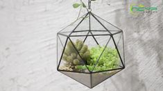 geometric  terrariums Terrarium Containers, Glass Terrarium, Terrariums, Flower Pots, Flowers, Planter Ideas, Ceramic Planters, Classic Elegance, Plant Holders
