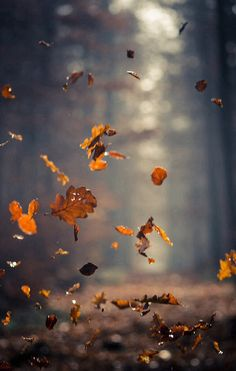 Autumn Coziness ~