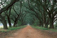 Plantation road near St. Martinsville, Louisiana  #South #Southern