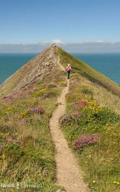 Higher Sharpnose Point, Morwenstow, Cornwall, England // Travel Inspiration, Guides & Tips
