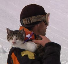 CARCA - Canadian Avalanche Rescue Cat Association trains domestic cats in emergency avalanche rescue procedures.