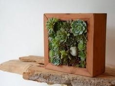 Really enjoy the symmetry of succulents and the architectural wood box with the natural wood shelf