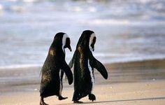 Waddling is the cute thing. Holding their hands is the true thing.