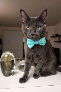 cute cat | Animal Lovers