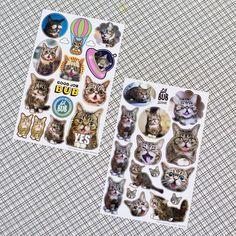 Lil BUB Sticker Sheet