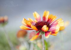 Etsy listing at https://www.etsy.com/listing/256866475/flower-photography-nature-photography