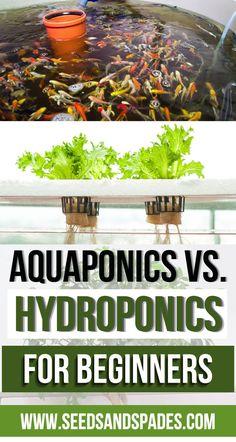 Aquaponics Vs Hydroponics Guide for Beginners