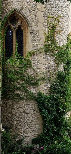 Ivy window, Tower of London grounds                              …