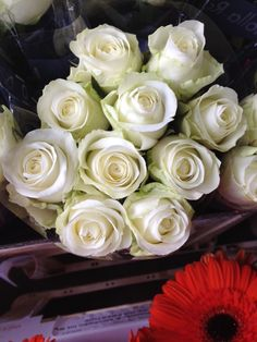 Rose 'Countdown', creamy white. Sold in bunches of 20 stems from the Flowermonger the wholesale floral home delivery service.