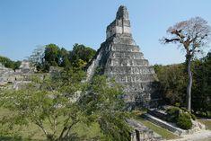 Templo el Gran Jaguar en el parque Tikal, con juego de pelota al frente, Petén Guatemala Tikal, Jaguar, Mexico, Park, City, Building, Travel, Maya Civilization, Temple