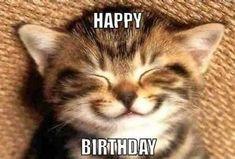 Cat Birthday Memes, Happy Birthday Funny Cats, Funny Happy Birthday Wishes, Happy Birthday Mom, Happy Birthday Images, Birthday Sayings, Birthday Ideas, Birthday Kitty, Happy Birthday Animals