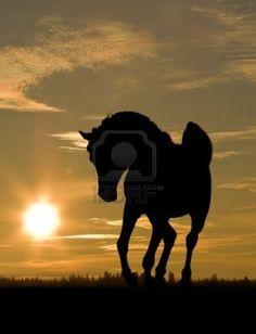 caballo árabe en la puesta de sol