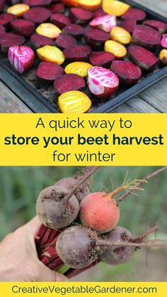 Learn how to store beets in 8 easy steps for use in savory recipes all winter long.