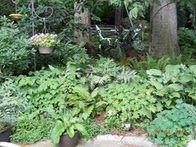 Shade Garden Summer 2011