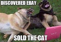 Dogs behaving badly......
