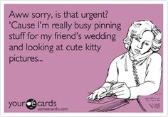 Search results for 'wedding' Ecards from Free and Funny cards and hilarious Posts Wedding Ecards, Funny Confessions, E Cards, Funny Cards, Someecards, Friend Wedding, Cute Cats, Laughter, Kitty