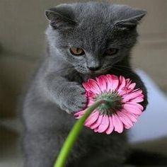 Cute Kittens Outside Cute Cats Saying Funny Things Animals And Pets, Baby Animals, Funny Animals, Cute Animals, Funny Cats, Animal Babies, Safari Animals, Pretty Cats, Beautiful Cats