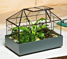 Victorian Conservatory Terrarium Kit Great gift from White Flower Farm, here in CT. I would be very pleased to receive.