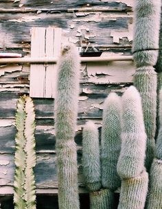 Love this #graytone cactus garden; this #monochromatic,soothing-but-prickly landscape.