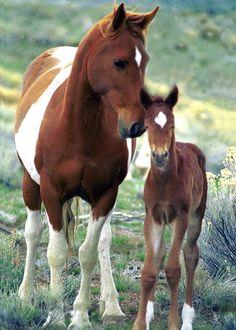 Wild Mare & Foal