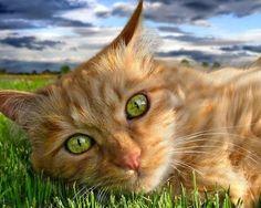 Breathtaking Kittie's Eyes