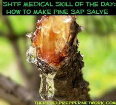 SHTF Medical Skill of the Day: How to make Pine Sap Salve Three natural ingredients, so many uses!